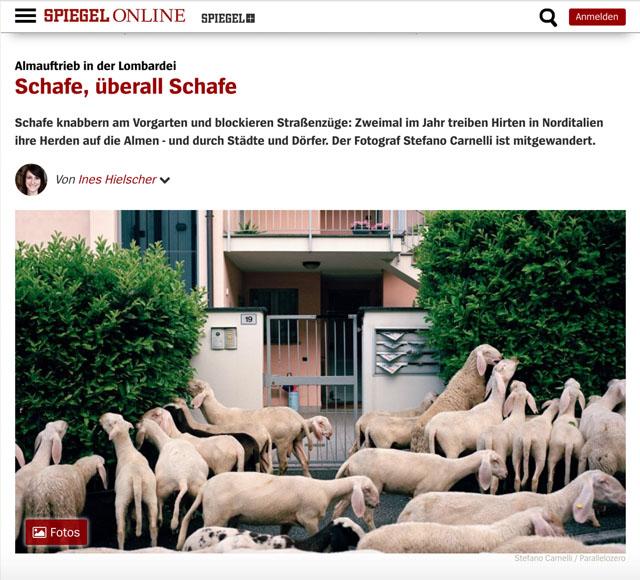 Almauftrieb in der Lombardei | Schafe, uberall Schafe 1