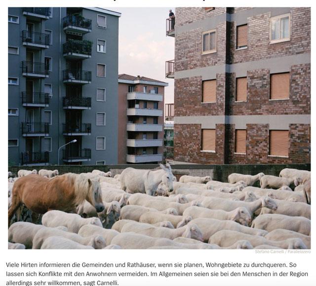 Almauftrieb in der Lombardei | Schafe, uberall Schafe 10