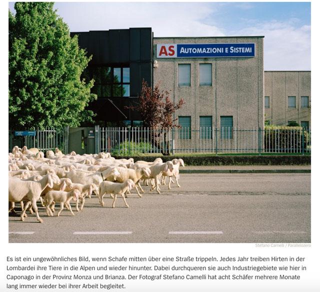 Almauftrieb in der Lombardei | Schafe, uberall Schafe 2