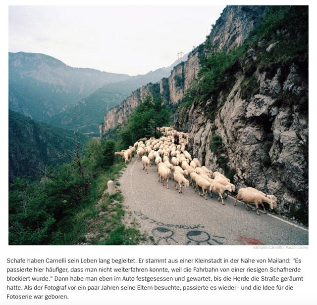 Almauftrieb in der Lombardei | Schafe, uberall Schafe 5