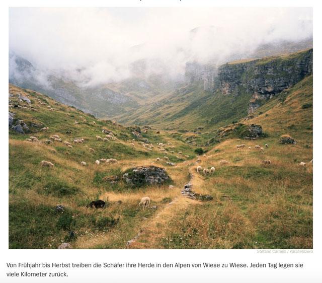 Almauftrieb in der Lombardei | Schafe, uberall Schafe 6
