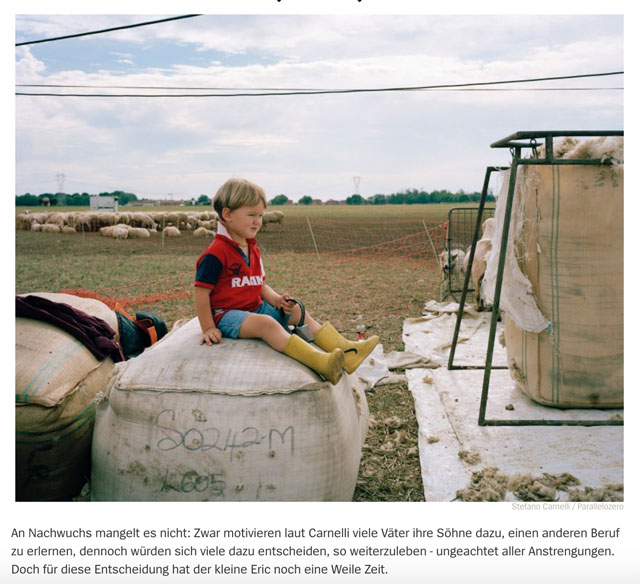 Almauftrieb in der Lombardei | Schafe, uberall Schafe 7