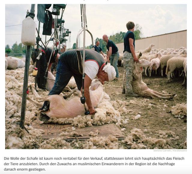 Almauftrieb in der Lombardei | Schafe, uberall Schafe 8