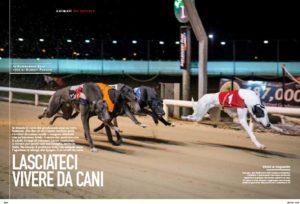 greyhounds_Storia11-1 1
