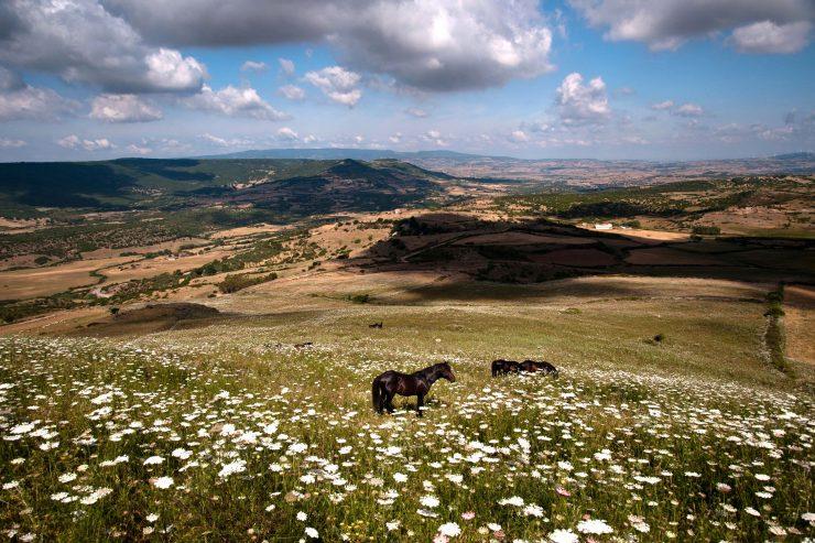 Horses' Lost Paradise