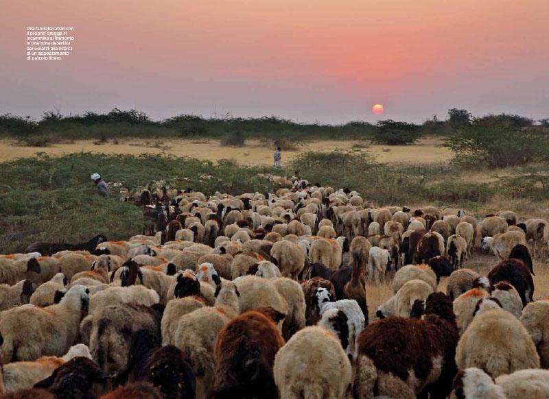 Gujarat Indiano | Rabari. Nomadi senza terra 4