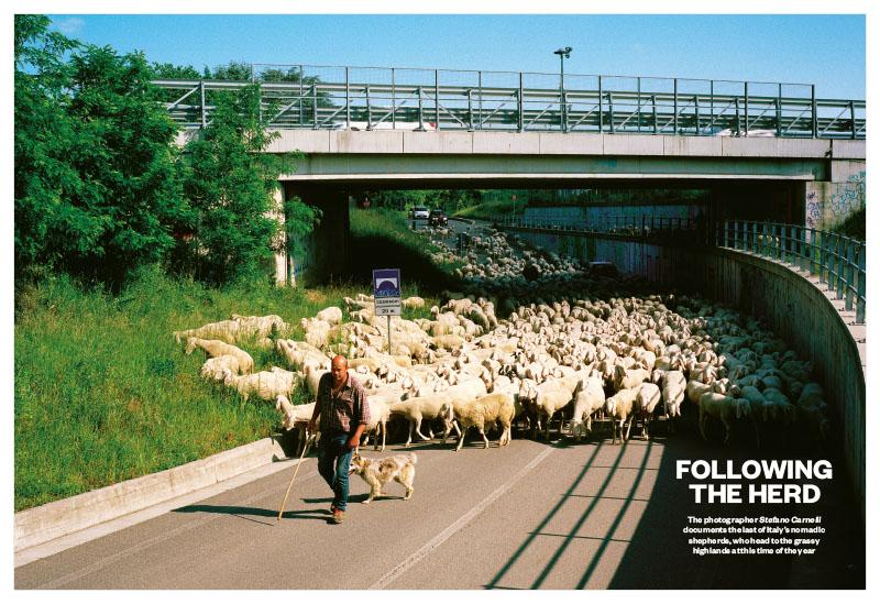 Transhumance | Following the herd 1