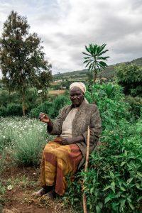 Kenya - The Killer Daisy 1