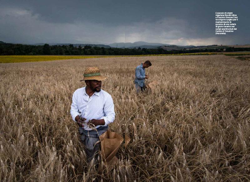 Cambio campo | Viaggio nell'agricoltura italiana stravolta dal clima 15