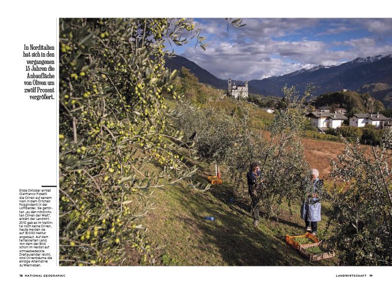 Italien   Fruchtwechsel 7