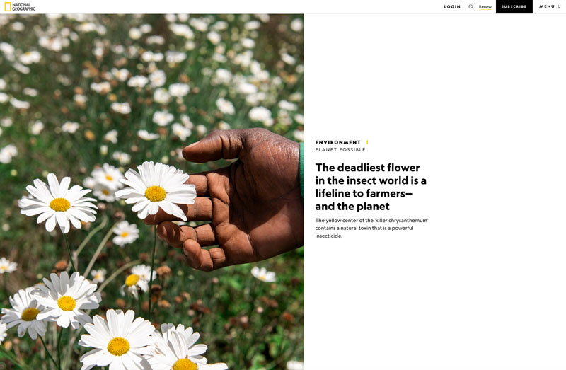 Planet Possible | The deadliest flower in the insect world is a lifeline to farmers - and the planet 1